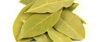 Лавровый лист-лечебные свойства